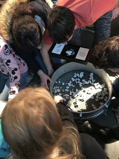 Workshop Fossilien 3 Science Festival 2019