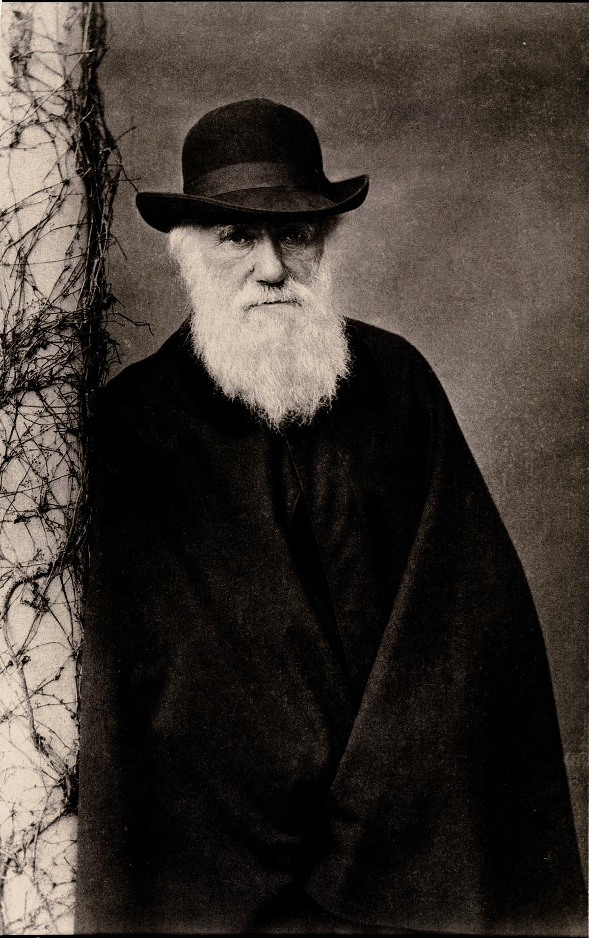 Die Evolutionstheorie   Darwin und seine Theorie der natürlichen ...